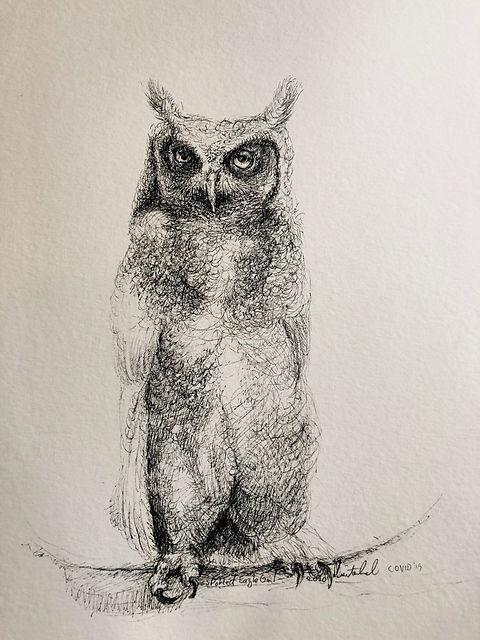 Spotted Eagle Owl.jpeg
