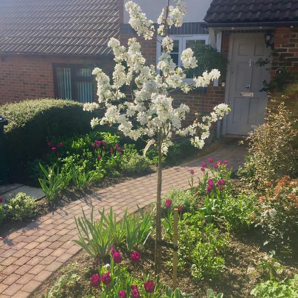 Greenhithe Garden Design