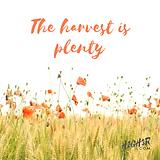 The harvest is plenty.png