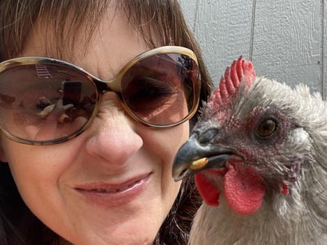 Backyard Chickens and Salmonella Prevention