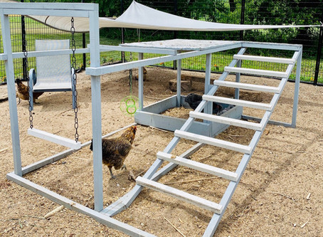 Building Play Areas for Your Chickens