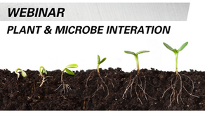 How Plant & Microbe Interactions Work with Microbiologist Rachel Raths