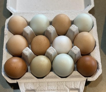 How to Sell Your Backyard Chicken Eggs