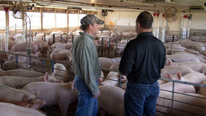 The Impact of VFDs on Swine Production