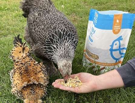 Support the Health + Vitality of Your Chickens With Snacks!