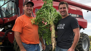 Iowa Farmers Build Soil Health Through Diverse Practices and Products
