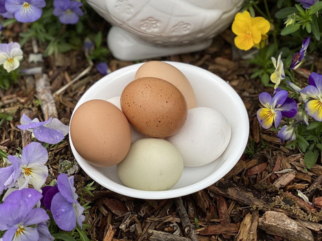 Happy National Egg Day!