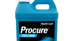 Procure® for Corn Captures Sun's Energy to Maximize Plant & Soil Health