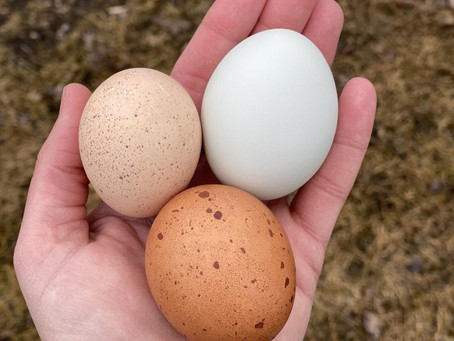 No Eggs in the Hen House?
