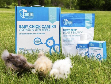 Overcoming Transportation Stress with New Baby Chicks