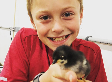 What Raising Chickens Taught Our Family