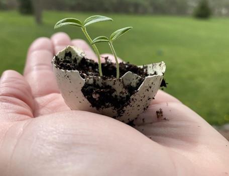 How to Start Your Garden in Eggshells