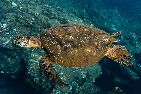 Reef_Guardians_Ambassador.jpg