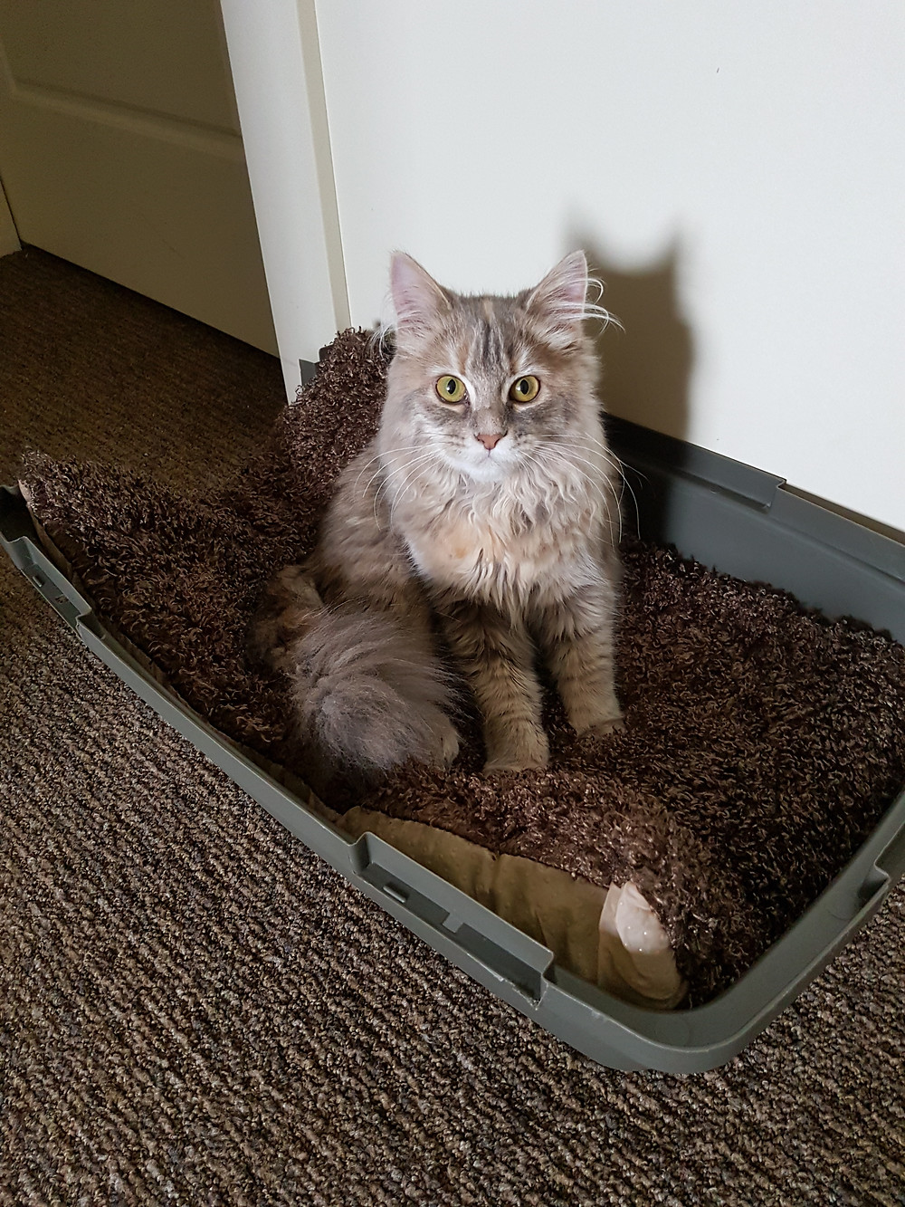 Arry (Aria) my kitty cat