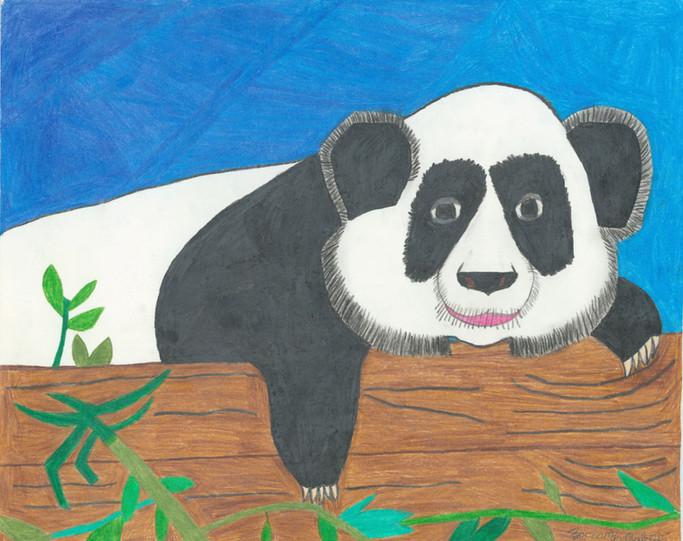 Panda by Zachary Robey