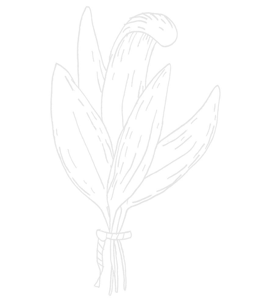 Leaf transparent.jpg