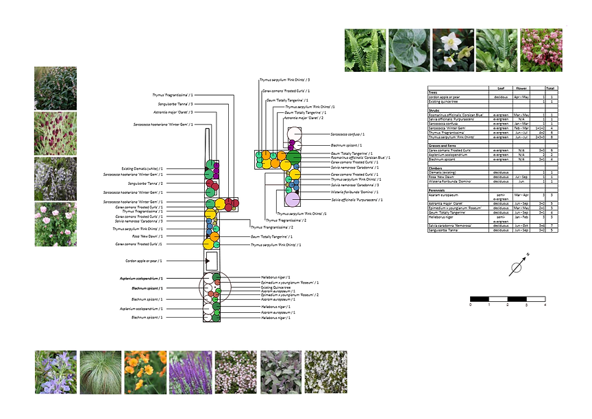 Garden Design Oxford planting plan