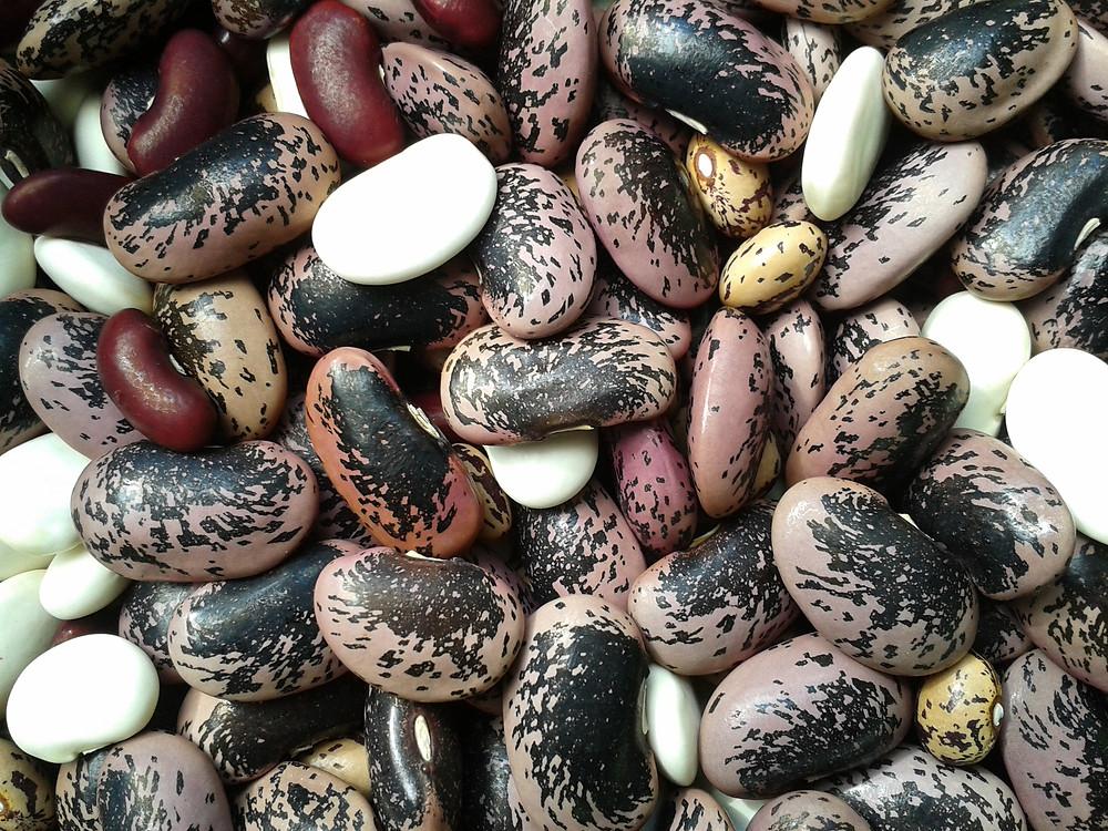 Dried beans - home grown
