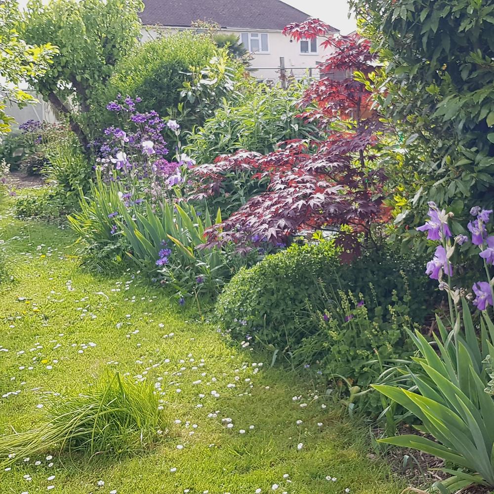 My garden, Cheltenham, Gloucestershire