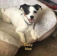 Daisy Mae.jpg