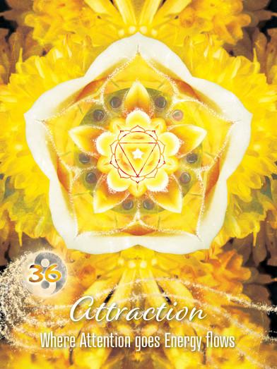 attraction soul seekers36.jpg
