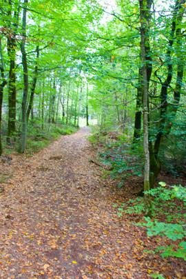 Skogen vår