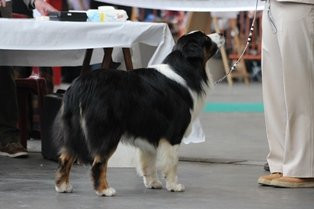 Brussels Dogshow