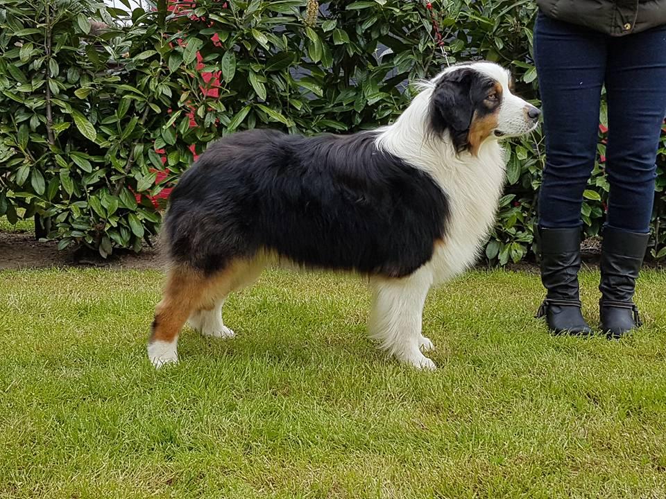 dogshow bonheide 3-960x720