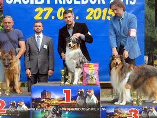 World Dogs Show Milano 2015 / Croatia 27-28/06/2015