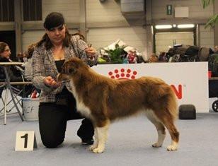 INT. Dogshow Gent