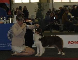Brussels Dogshow Belgium