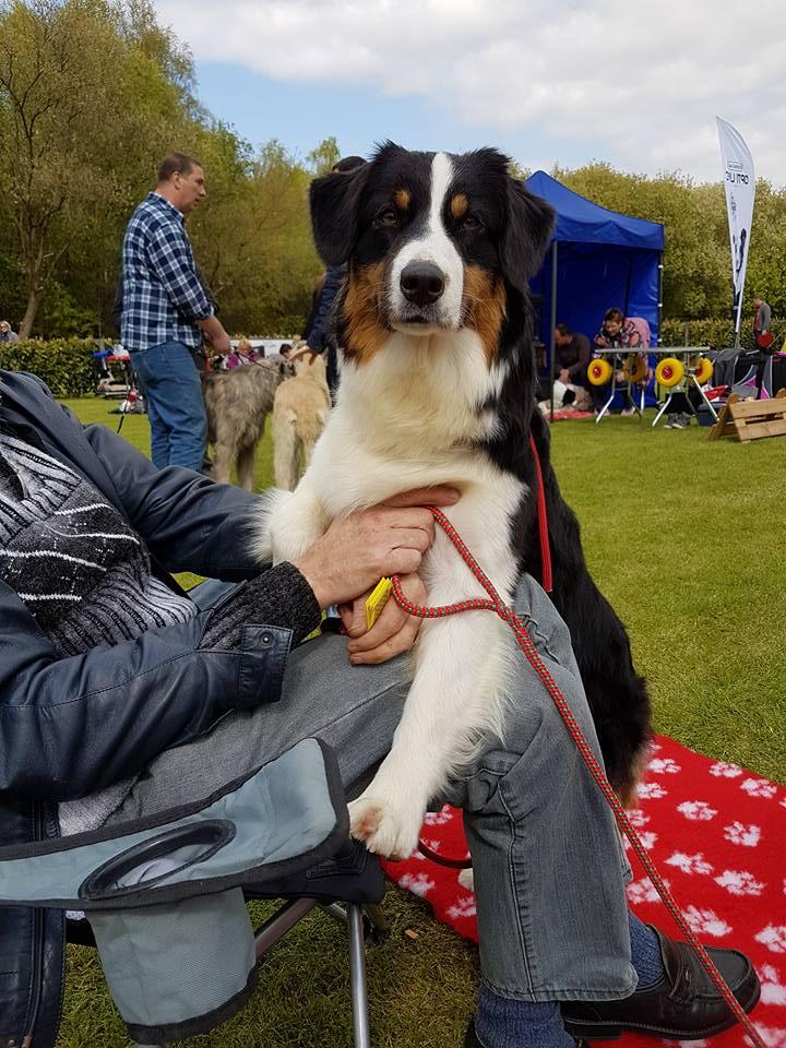 dogshow bonheide-720x960