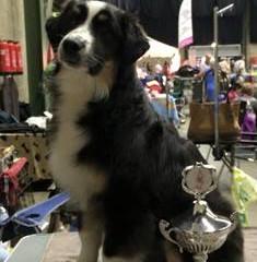 INT. NAT. Dogshow Genk Belgium Ambiorix Trophy CAC CACIB