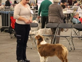 Dogshow Goes The Netherlands