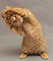 image chat qi gong site.png