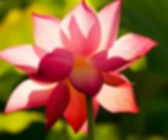 fleurs site.png