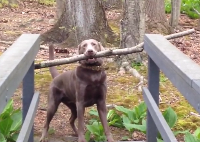 Dog with Stick.PNG