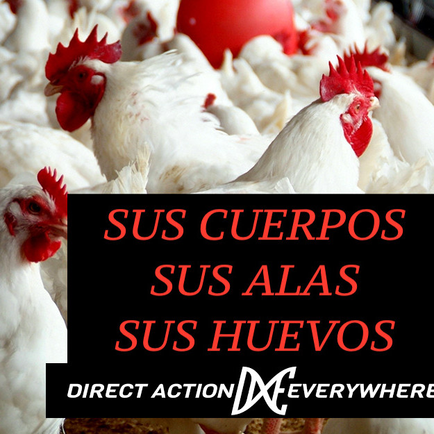 DxE Panama Disrupt for Chickens
