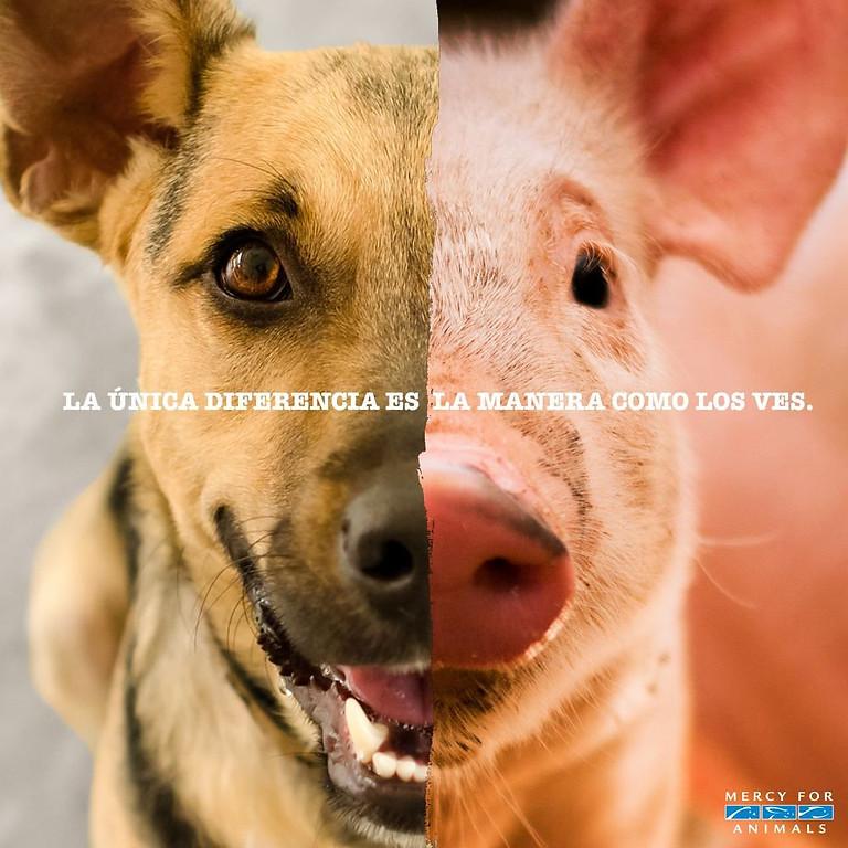 DxE Panama Disrupt Speciecism  (1)