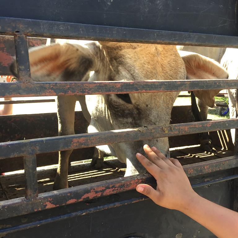 Bear Witness with David Animal Save