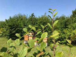 Bienenstöcke_Eremitage