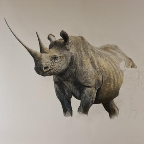 rhino%203_edited.jpg