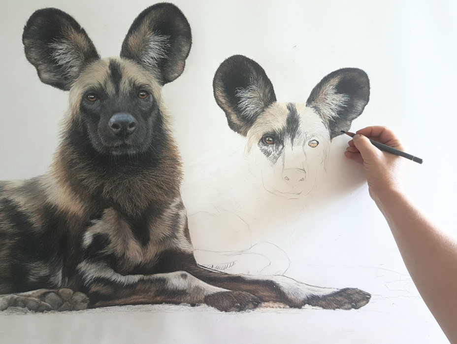 drawing We're All Ears