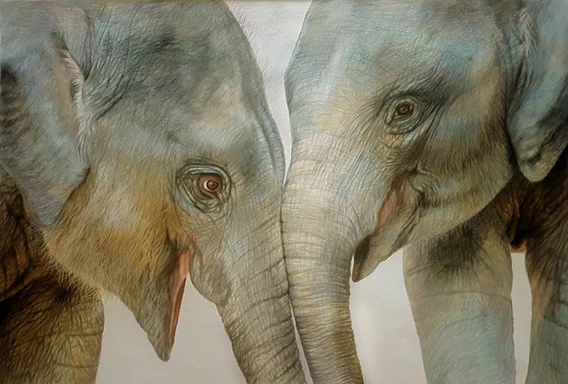 Best Friends - baby elephants