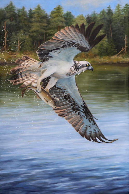 'Morning catch' Small Ltd Ed print 42 x 60cm on Canvas unstretched or varnished