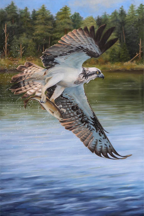 Morning Catch - 42 x 60 cm on paper - other sizes available
