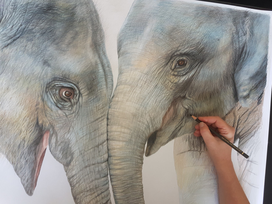 drawing baby elephants