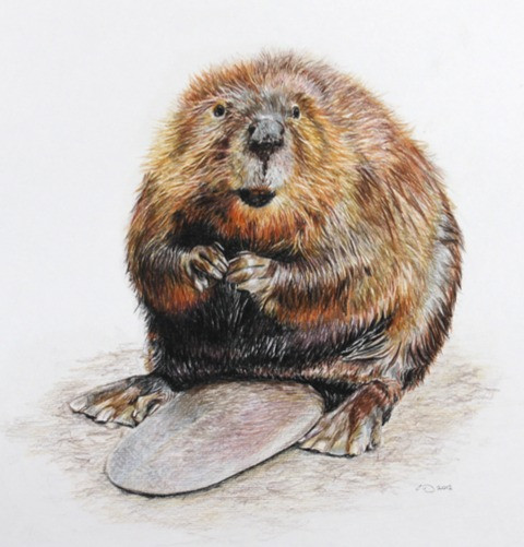 Can I help you? - Beaver - SOLD