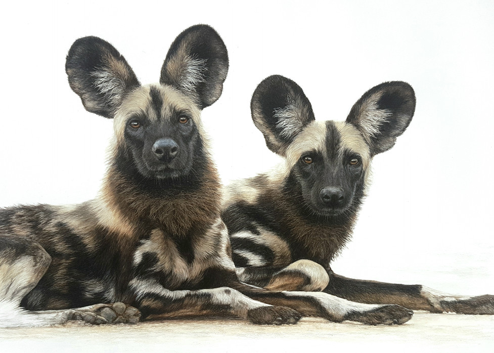 We're All Ears - Wild Dogs
