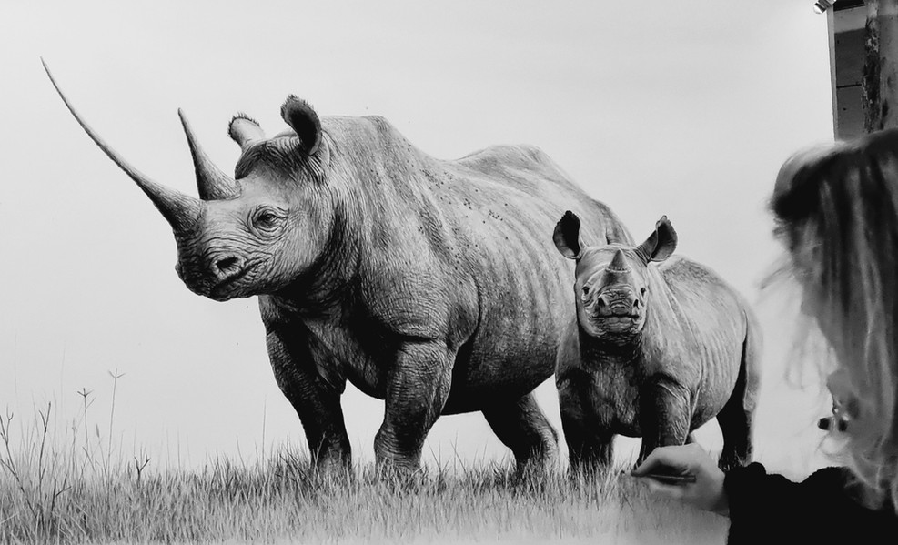 Black rhino and calf - in progress